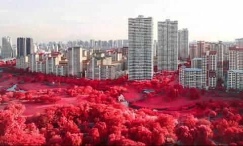 Κόκκινη φαντασμαγορία... λουλουδιών στη Σιγκαπούρη (pics)
