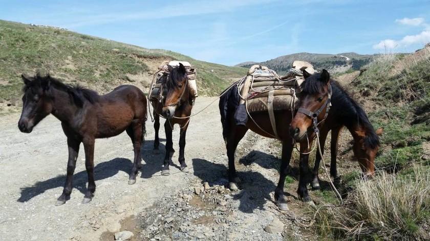 «Τσάκωσαν» έξι Αλβανούς στα σύνορα με 132 κιλά «λουλούδια του Δαρβίνου»