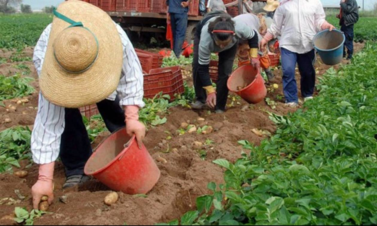 Αγρότες: Σύνταξη στα 67 και άμεση έναρξη ασφάλισης