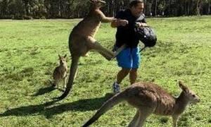 Αυστραλία: Αιματηρή επίθεση καγκουρό σε τουρίστες που το τάιζαν