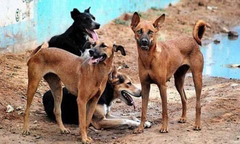 Χωρικοί σκότωσαν 13 αδέσποτα σκυλιά ως αντίποινα για το θάνατο παιδιών