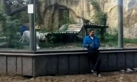 Γύρισε... πλάτη σε λευκή τίγρη για να βγάλει φωτογραφία. Αυτό που ακολούθησε; (video)