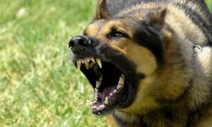 Αίγιο: Σκύλος επιτέθηκε σε κοριτσάκι και το τραυμάτισε