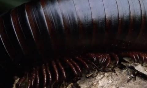 Ο,τι πιο «σκληρό»! Δέκα πλάσματα που δεν θέλεις ποτέ να συναντήσεις... (video)