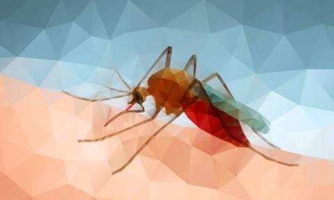 Αυτό είναι το απόλυτο «κόλπο» για να μη σας τσιμπάνε τα κουνούπια