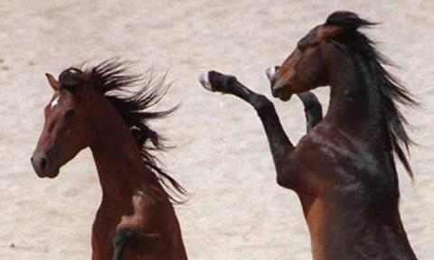 Μακάβριο θέαμα:  Σχεδόν 200 άγρια άλογα βρέθηκαν νεκρά στην έρημο της Αριζόνα