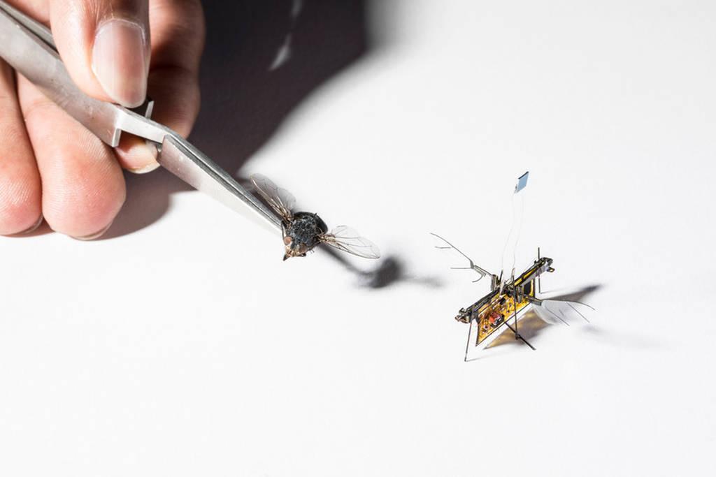 Βγαλμένο από το μέλλον: Αυτό είναι το πρώτο μικροσκοπικό ρομπότ-έντομο (Pics+Vid)