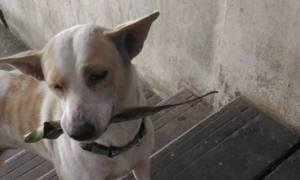 Αδέσποτο κουτάβι εμφανίζεται κάθε μέρα με ένα φύλλο - Δεν πάει το μυαλό σας γιατί! (video+pics)