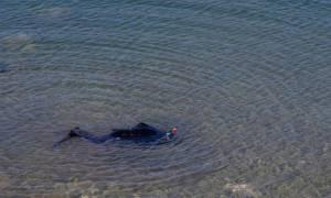 Θρίλερ με αγνοούμενο ψαροντουφεκά στην Κεφαλονιά (pics)