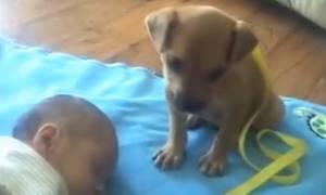 Πόσο γλυκό: Δείτε πώς αποκοιμήθηκε το κουταβάκι δίπλα σε ένα μωρό! (video)