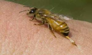 Τρίκαλα: Ανατροπή μυστήριο στο θάνατο του 34χρονου «από μέλισσα» – Δεν βρέθηκαν σημάδια από τσίμπημα