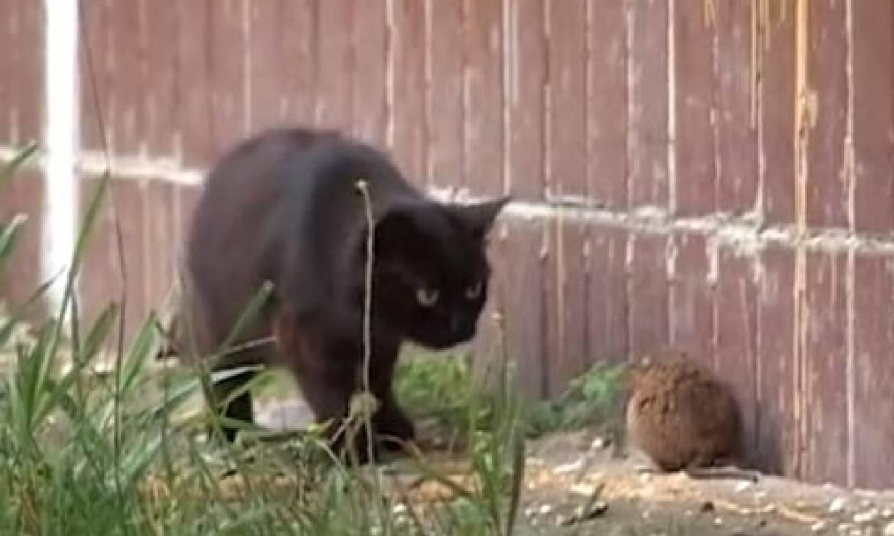 Επική μάχη! Γάτα εναντίον αρουραίου. Η κατάληξη δεν είναι αυτή που νομίζετε... (video)