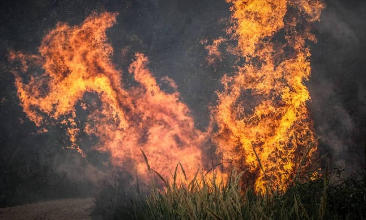 Μεγάλη φωτιά στα Άνω Λιόσια - Newsbomb - Ειδησεις - News