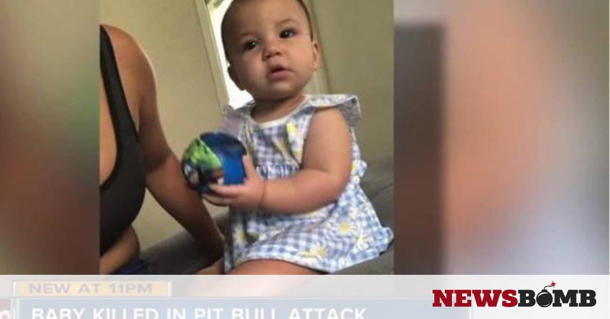 Σοκ στη Φλόριντα  Κοριτσάκι 8 μηνών σκοτώθηκε από το πίτμπουλ της  οικογένειας - Newsbomb 391fdc91844