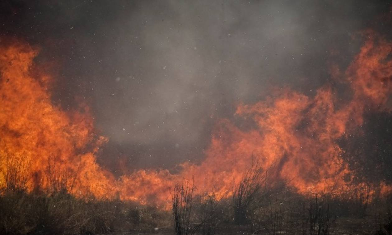Φωτιά ΤΩΡΑ στα Πολιτικά Ευβοίας