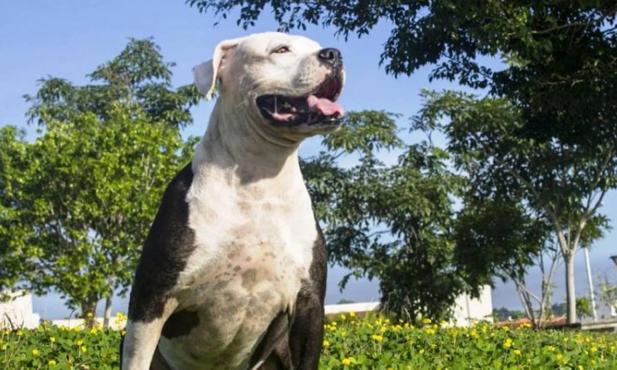 Σοκ στην Ναύπακτο: Σκύλος δάγκωσε βρέφος 10 μηνών στο πρόσωπο