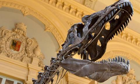 Σκελετός δεινοσαύρου πουλήθηκε σε ιδιώτη αντί 2,3 εκατ. δολαρίων