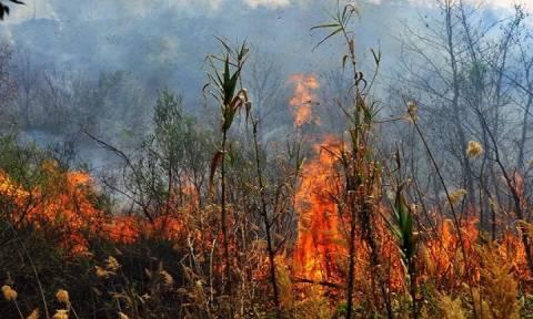 На Кипре 93% пожаров происходят по вине людей
