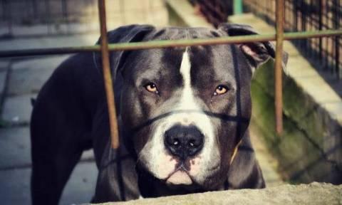 Επίθεση σκύλου σε βρέφος 10 μηνών: Ως πότε η αδιαφορία θα ονομάζεται φιλοζωΐα;