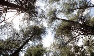 Κρήτη: Αγνοείται Γάλλος τουρίστας στο φαράγγι της Ζάκρου