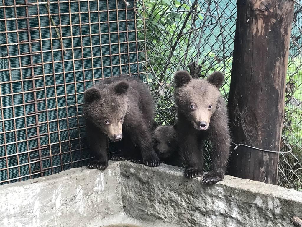 Η παρέα των μικρών αρκούδων του «Αρκτούρου» μεγάλωσε... (pics)