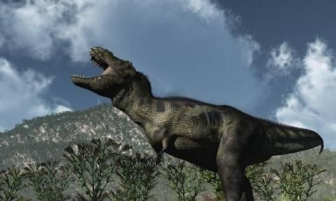 Οι δεινόσαυροι «ζουν»: Μυστηριώδης σκελετός στα «χέρια» ιδιώτη αντί 2,3 εκατ. δολαρίων!