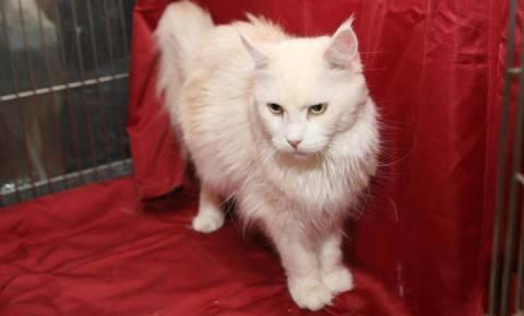 Αχιλλέας: Ο γάτος... μάντης του Μουντιάλ!