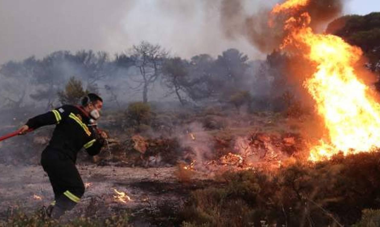 Υπό μερικό έλεγχο η πυρκαγιά στην Πύλο Μεσσηνίας