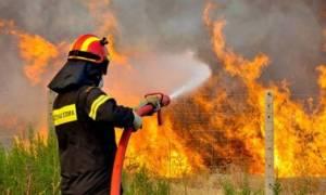 Μεγάλη φωτιά στη Βοιωτία: Απειλούνται αποθήκες καυσίμων