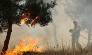 Φωτιά σε δασική έκταση στην περιοχή Αμπέλια Αγρινίου