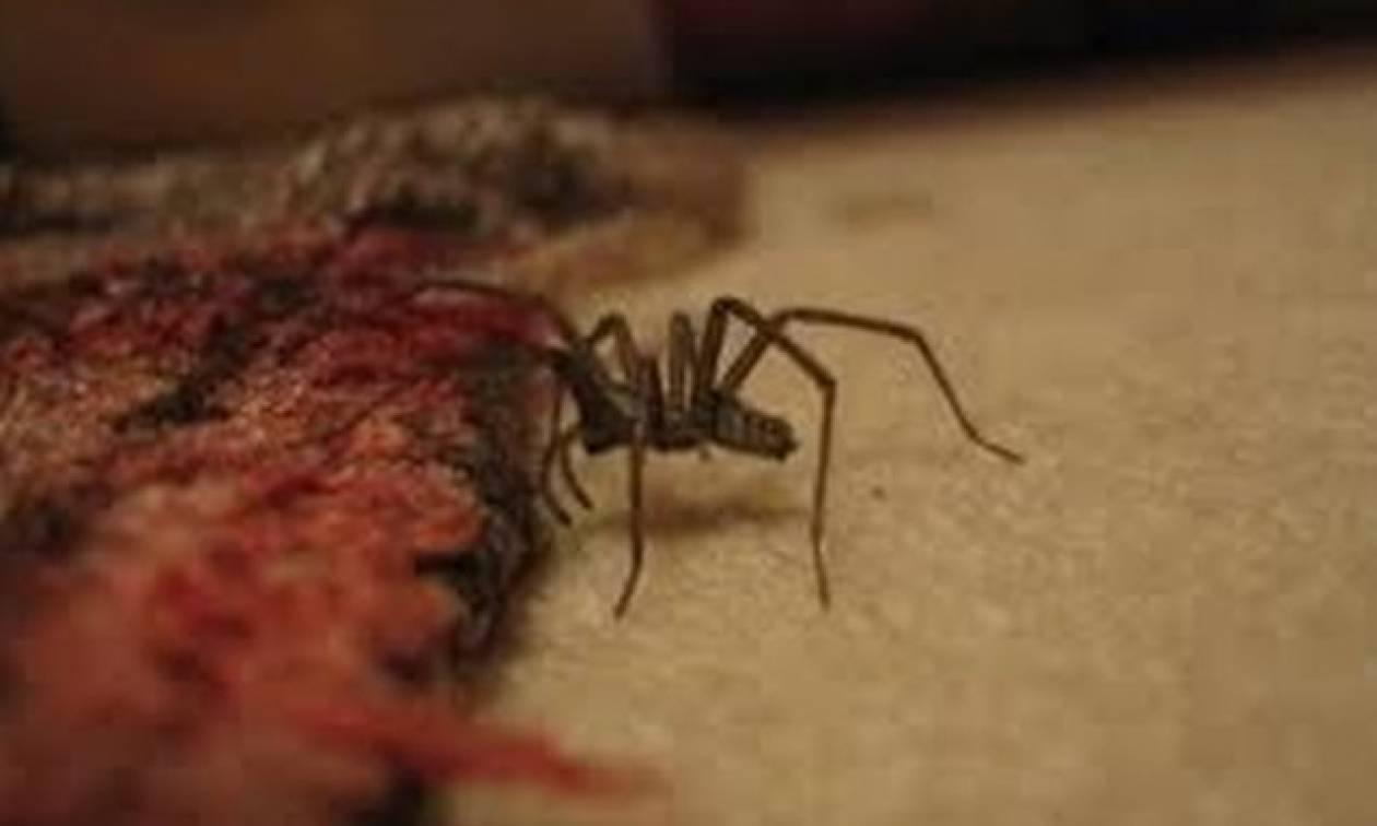 Γιατί δεν πρέπει να σκοτώσετε την επόμενη αράχνη που θα βρείτε στο σπίτι σας