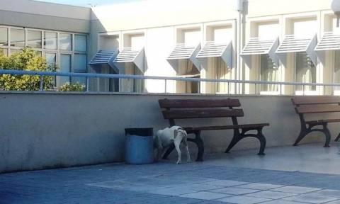 Ιωάννινα: Ασθενής του νοσοκομείου τραυματίστηκε από επίθεση σκύλου