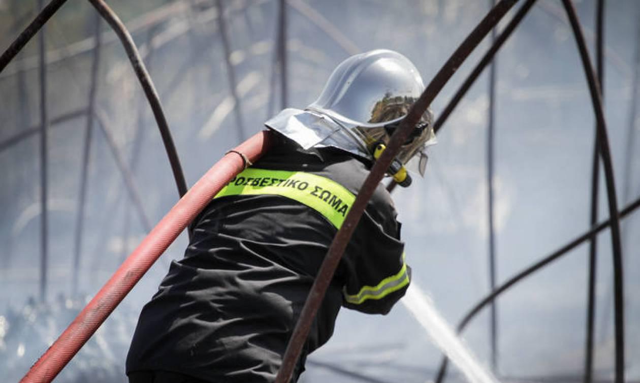 Μεγάλη πυρκαγιά ΤΩΡΑ σε εργοστάσιο στα Οινόφυτα Βοιωτίας