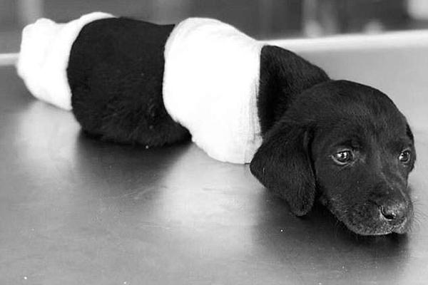 puppyturkey1806a
