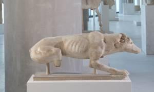 Μαρμάρινο γλυπτό κυνηγετικού σκυλιού βρέθηκε νοτίως του Παρθενώνα