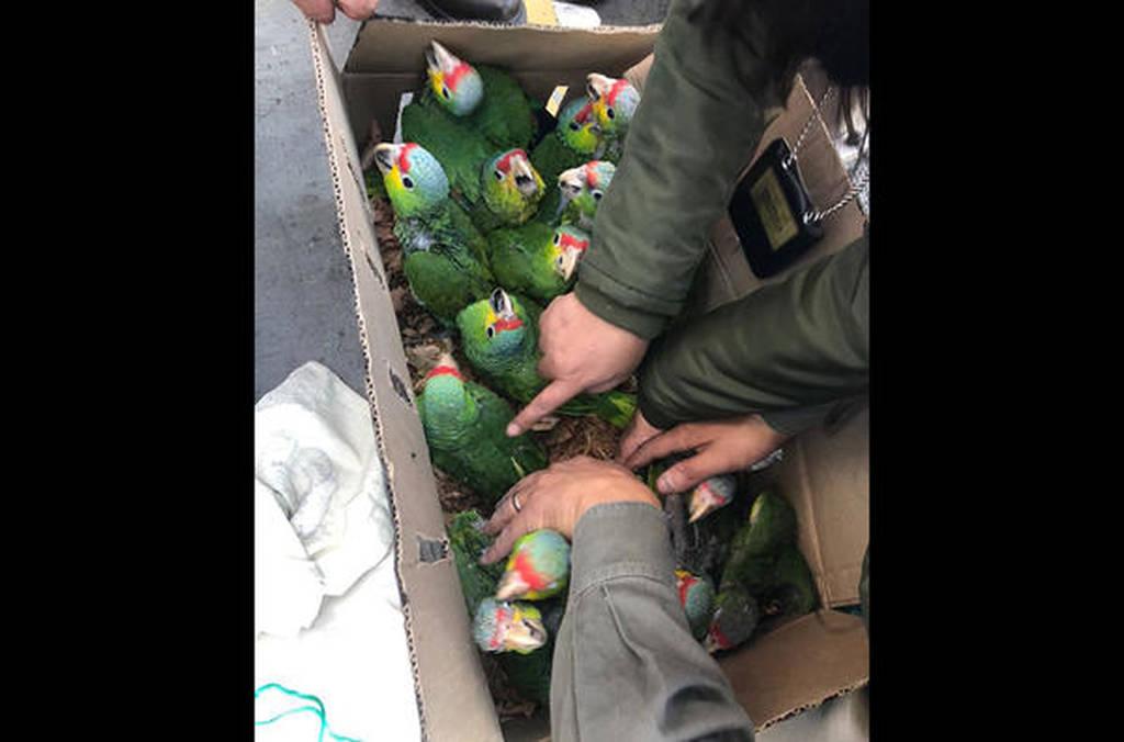 Γαλλία: Πύθωνες, κροκόδειλοι και χιλιάδες πουλιά κατασχέθηκαν σε μεγάλη επιχείρηση της Interpol