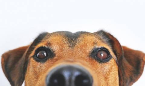 Απόφαση - σταθμός στη Νότια Κορέα: Παράνομη η σφαγή σκύλων για το κρέας τους