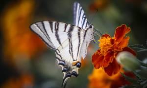 Καλοκαίρι 2018: Η μαγεία της ελληνικής φύσης σε 12 φωτογραφίες (pics)