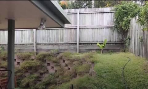 Κι όμως σε αυτή τη φωτογραφία κρύβεται ένα τεράστιο φίδι! (video)