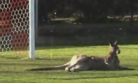 Μουντιάλ 2018: Επικό βίντεο! Η Αυστραλία ανακοίνωσε… τερματοφύλακα - καγκουρό