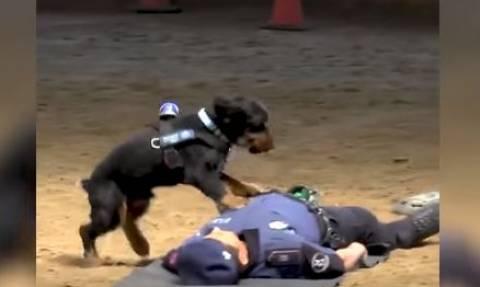 Βίντεο: Σκύλος της Αστυνομίας κάνει τεχνητή αναπνοή!