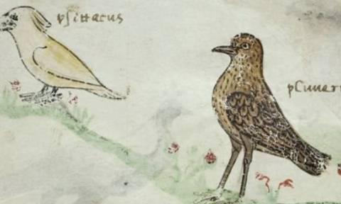 Τι μπορεί να αποκάλυψε ένας… παπαγάλος σε χειρόγραφο του 13ου αιώνα;