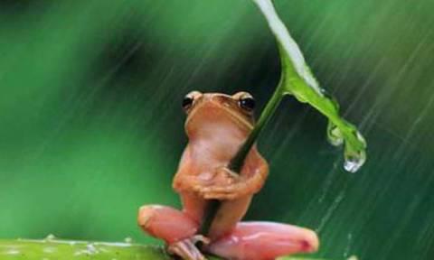 Βάτραχος καταπίνει πυγολαμπίδα και παθαίνει αυτό που ακριβώς φαντάζεστε! (vid)