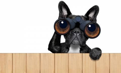 Μάθε ποια 4 ζώδια είναι εξπέρ στις... παρακολουθήσεις