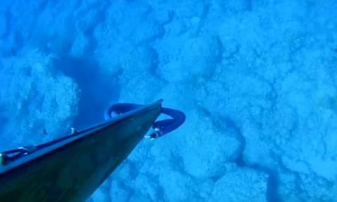 Χανιά: «Πάγωσε» το αίμα του όταν είδε ξαφνικά μέσα στη θάλασσα αυτόν τον εισβολέα - φονιά! (vid)