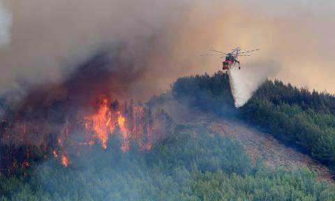 Φωτιά ΤΩΡΑ στο Μεσολόγγι - Δεν απειλεί κατοικημένες περιοχές