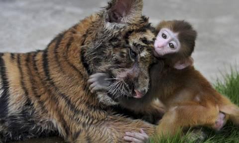 Γιατί οι Αρχές της Κίνας κατέσχεσαν 3.000 σπάνια ζώα;