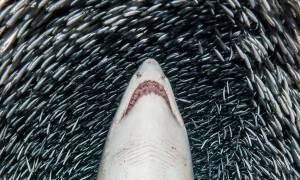 Οι 20 φωτογραφίες από τον βυθό της θάλασσας που θα σου ΚΟΨΟΥΝ την ανάσα!