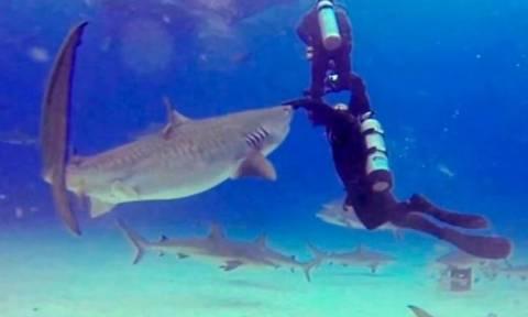 Καρχαρίας ετοιμάζεται να κατασπαράξει αγοράκι και τότε συμβαίνει κάτι ΕΚΠΛΗΚΤΙΚΟ! (video)