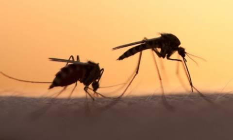 Με τις συνεχείς βροχοπτώσεις μάς έπνιξαν τα κουνούπια - Ξεκινούν νέοι ψεκασμοί